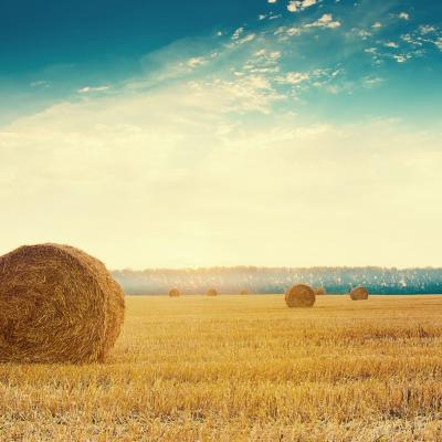 hay bales, farming, countryside, rural